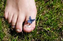 Brave Alpine butterflies