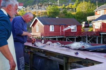 Codfish slaughter