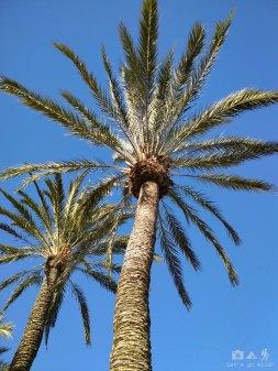 Killing time under palm trees, sunny Ibiza