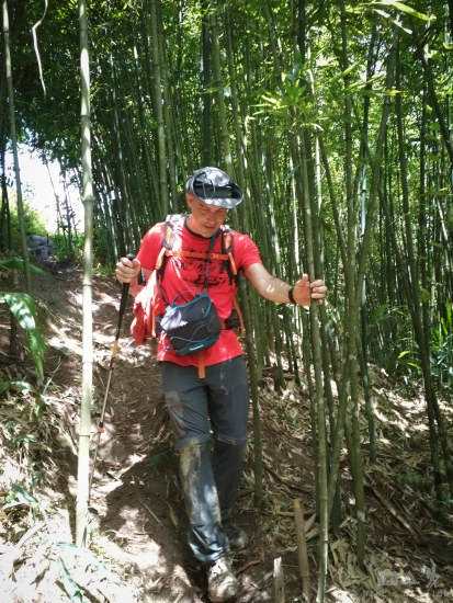 Crossing a young bamboo forest